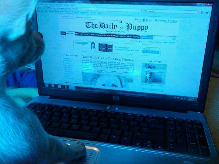 My puppy milo surfing the web :)