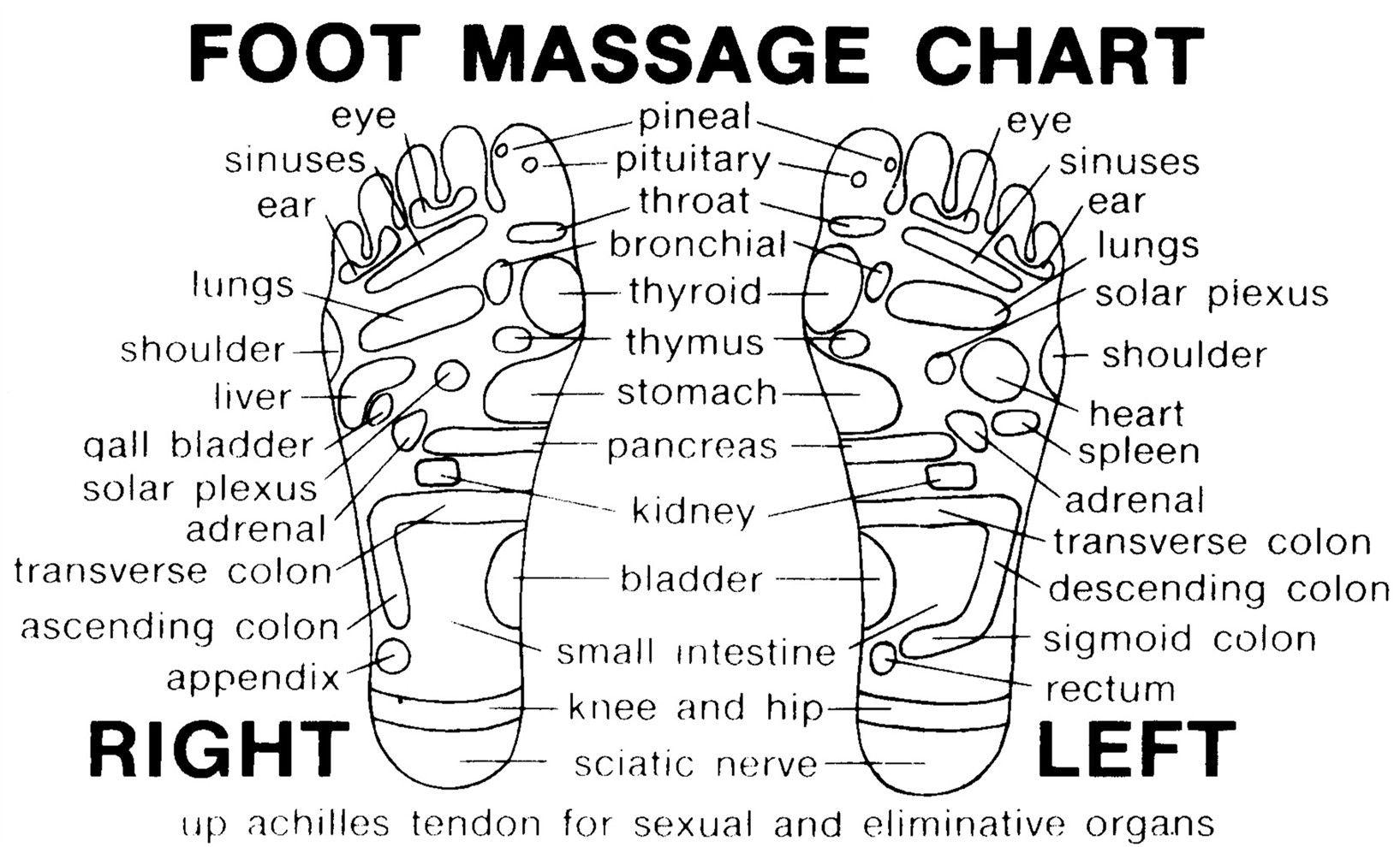 Full Foot Reflexology Charts Printable