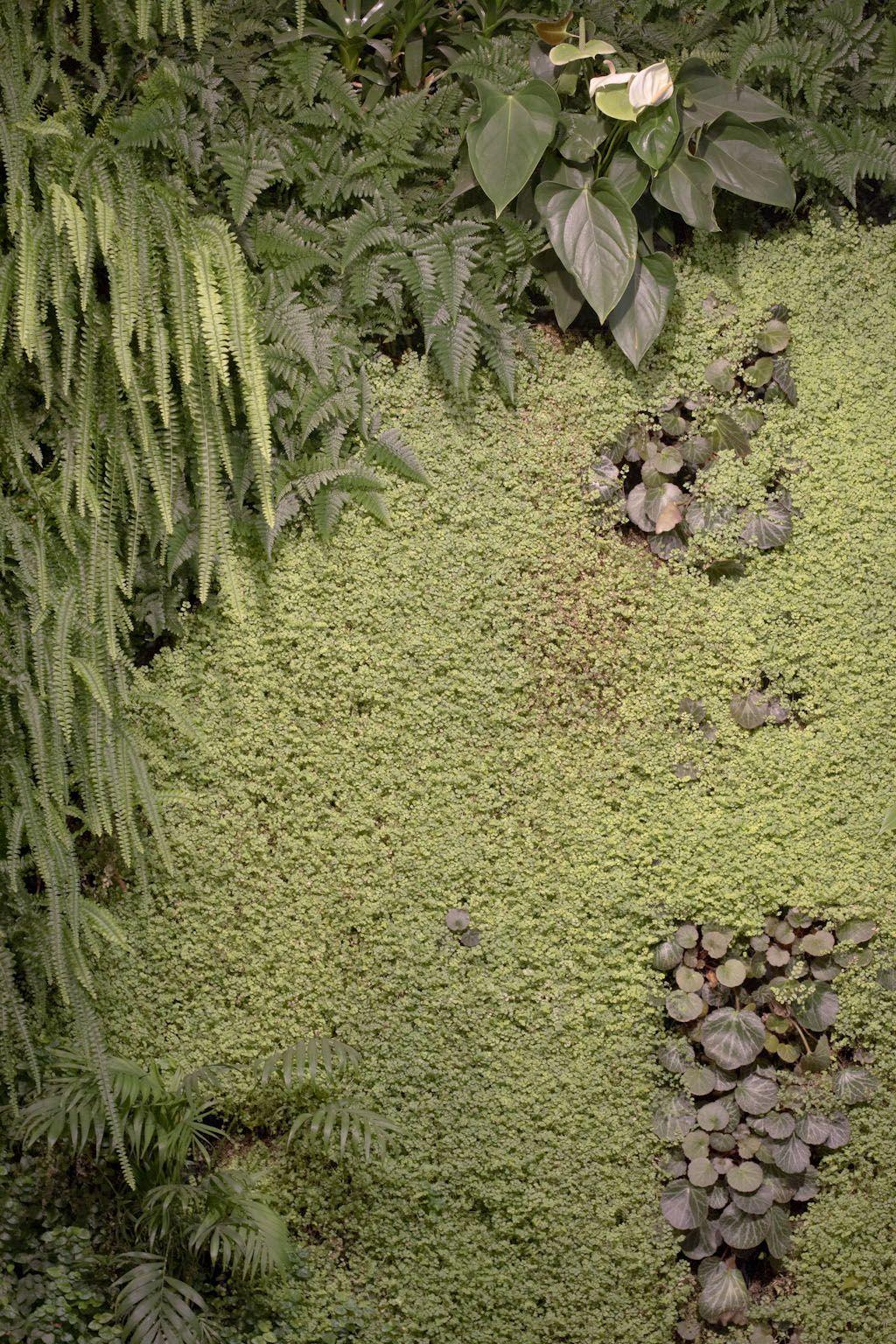 7 Meravigliosi benefici del giardino verticale interno ...