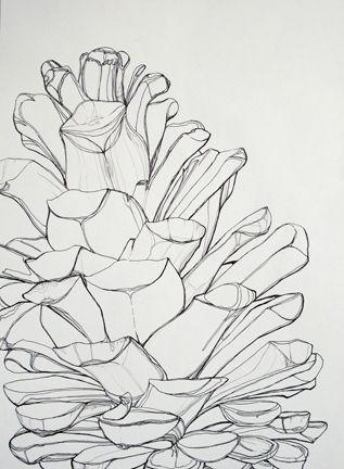 Pine Cone Line Study 絵技法 Pinterest