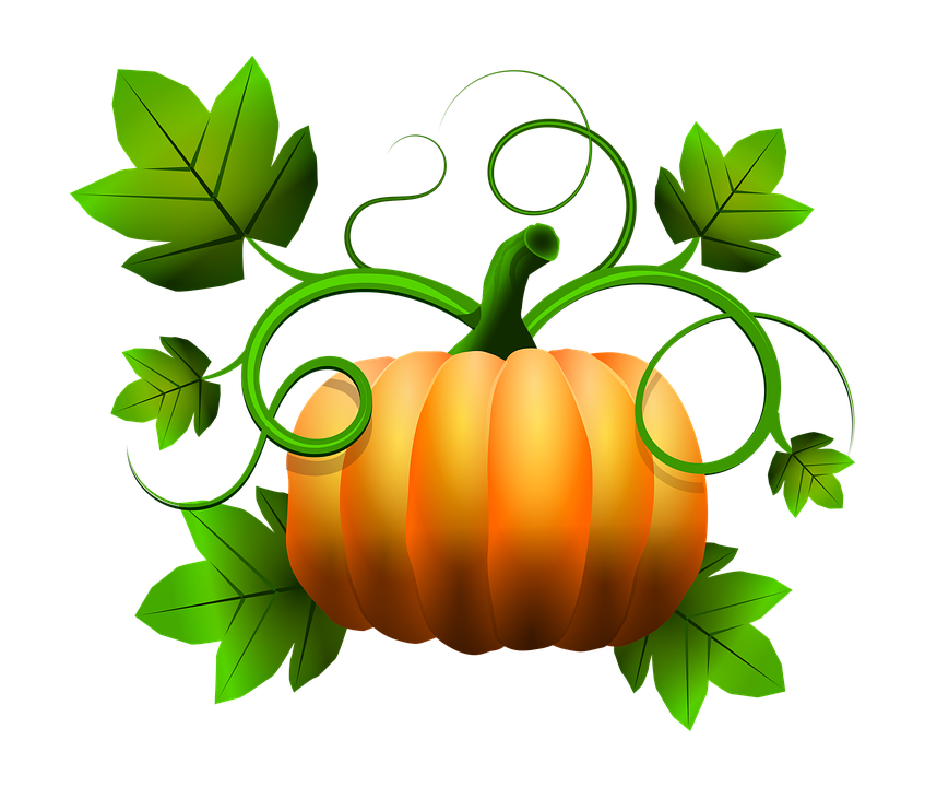 Image result for pumpkin vine Pumpkin vine, Pumpkin