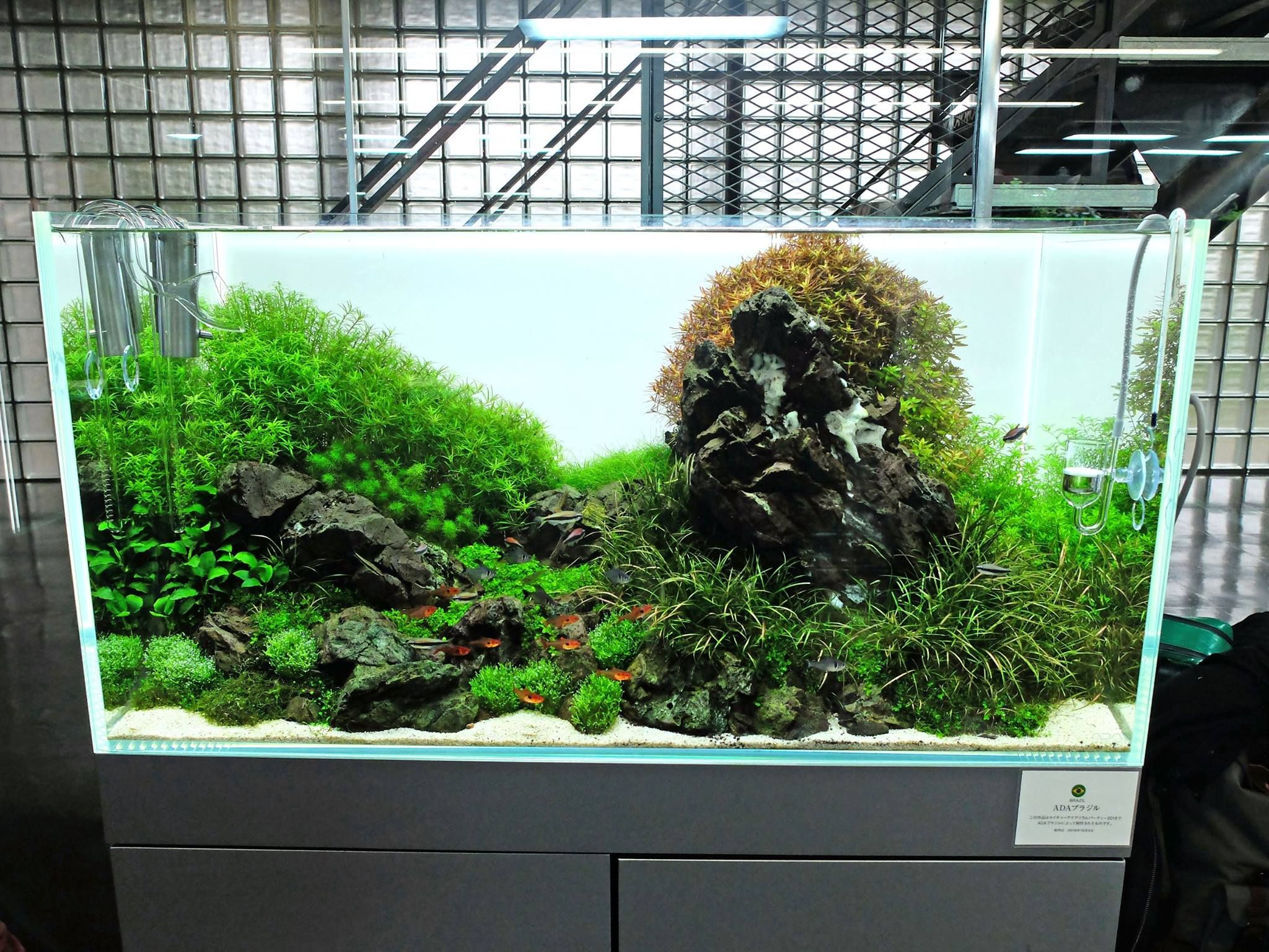 Aquascape Ideas Aquascaping Layouts