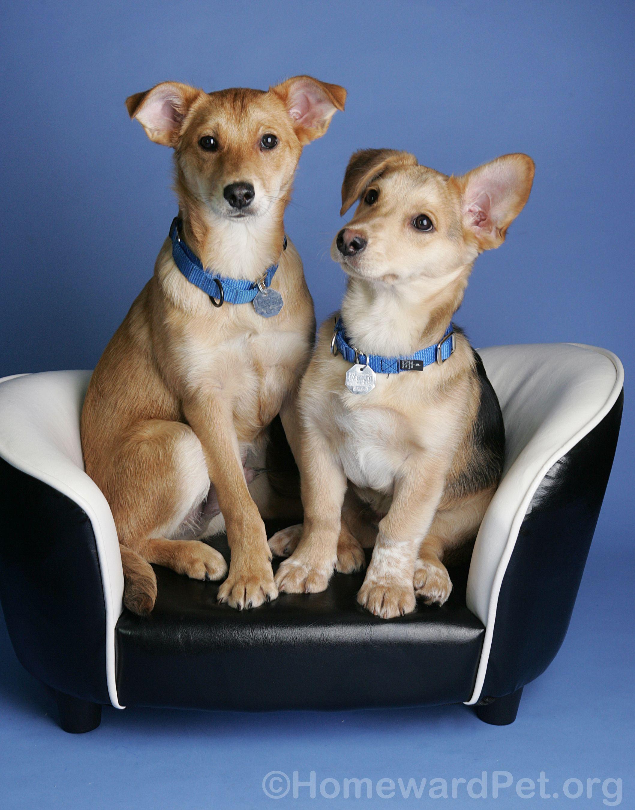 Happy Friday No Kill Animal Shelter Pets