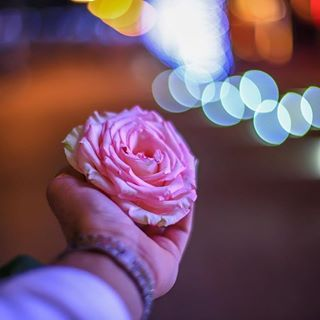 Pin By Sabra Jawad On Arab Swag Holding Flowers Flowers Rose