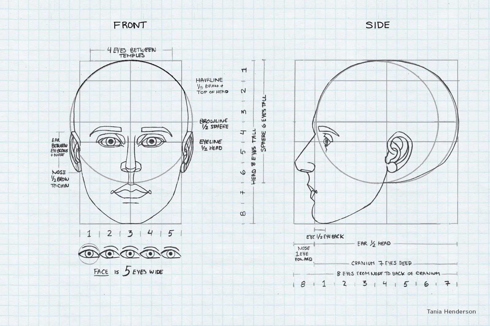 Anatomy Diagrams | Sketch book, Face drawing reference ...