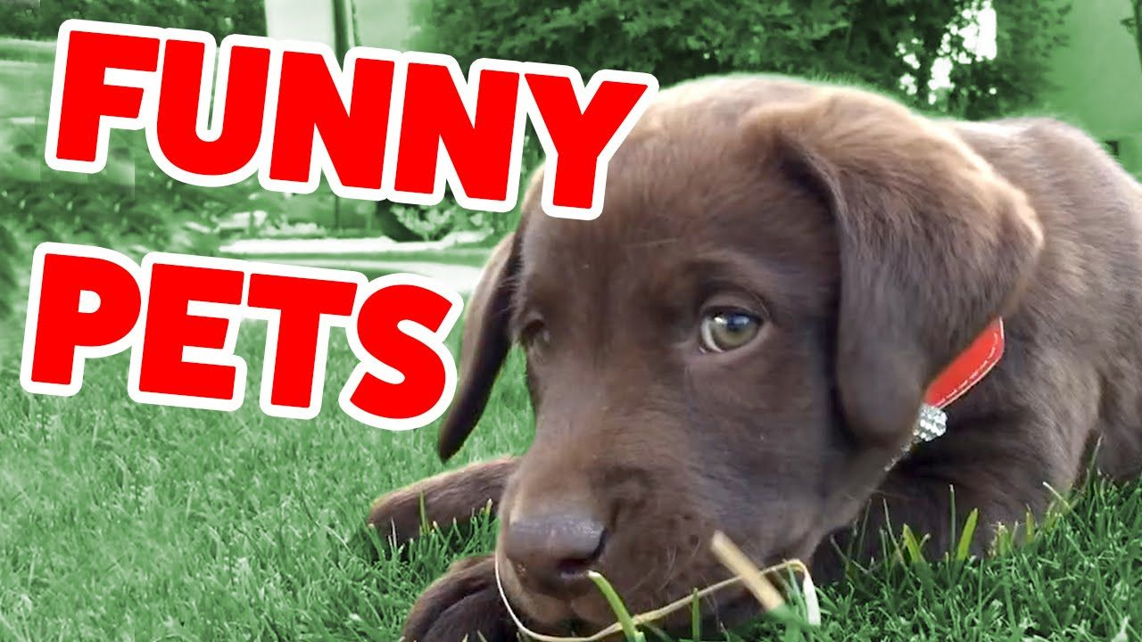 10 Most Viral Cat Videos on the cat dog cute