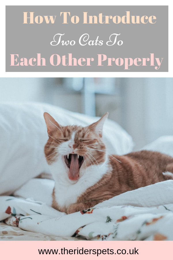 How To Introduce Two Cats To Each Other Properly Introducing A New Cat Cat Adoption Kittens Cutest Baby