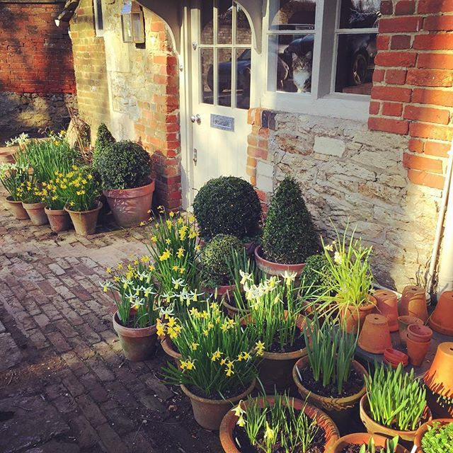 Potted boxwood  bulbs at English cottage door - Charlotte-Anne