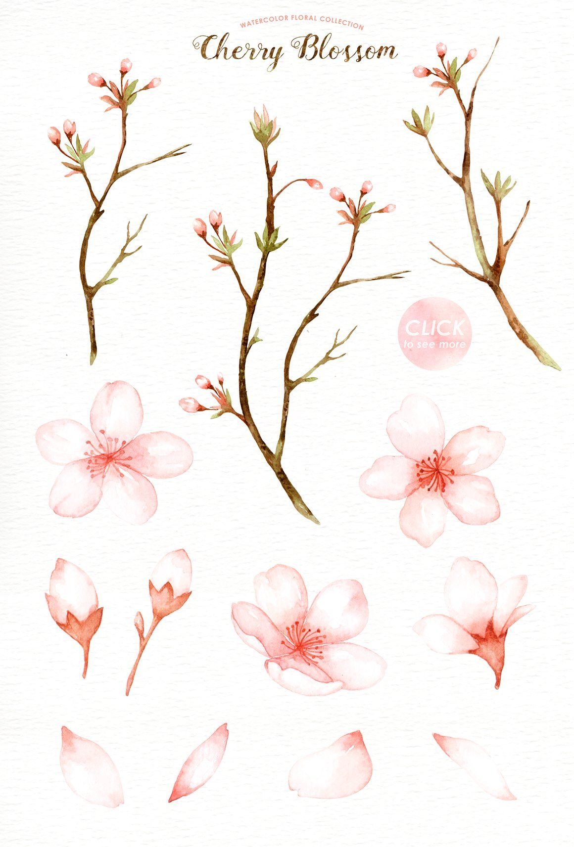 Cherry Blossom Watercolor Clip Art Cherry Blossom Watercolor Cherry Blossom Drawing Cherry Blossom Art
