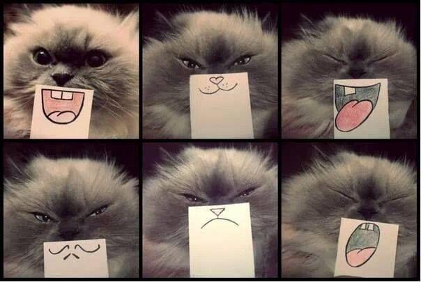 gatito.....!