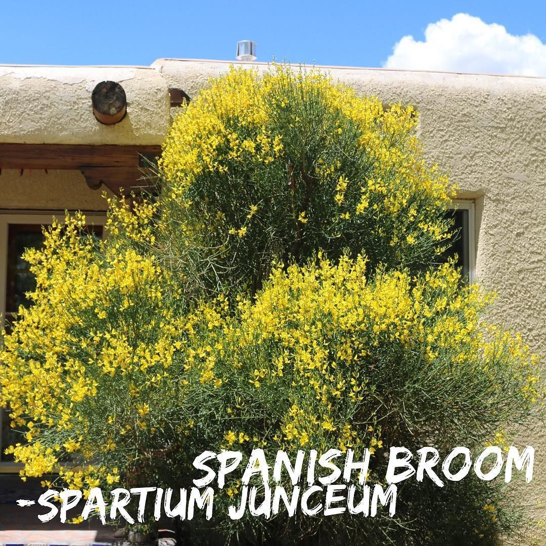 Instagram Photo By Jill Brown Landscape Architect May 18 2016 At 1 55pm Utc Xeriscape Plants Landscape Architect