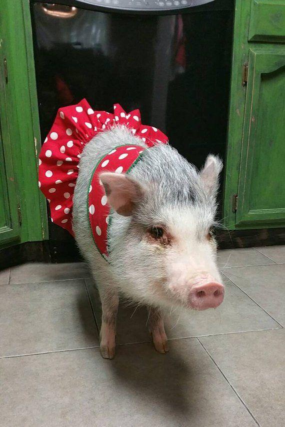 9820a6f360a4e Pink Piggies! Pet Tutu, Mini Pig Clothes, Pig Tutu in 2019 ...