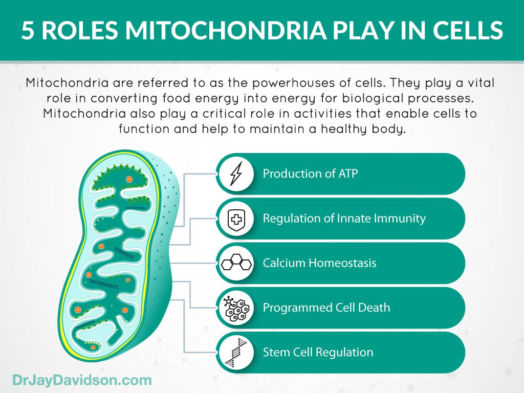 Mitochondria Cell Powerhouses That Play A Vital Role In Immune Function Dr Jay Davidson In 2020 Mitochondria Mitochondrial Disease Science Cells
