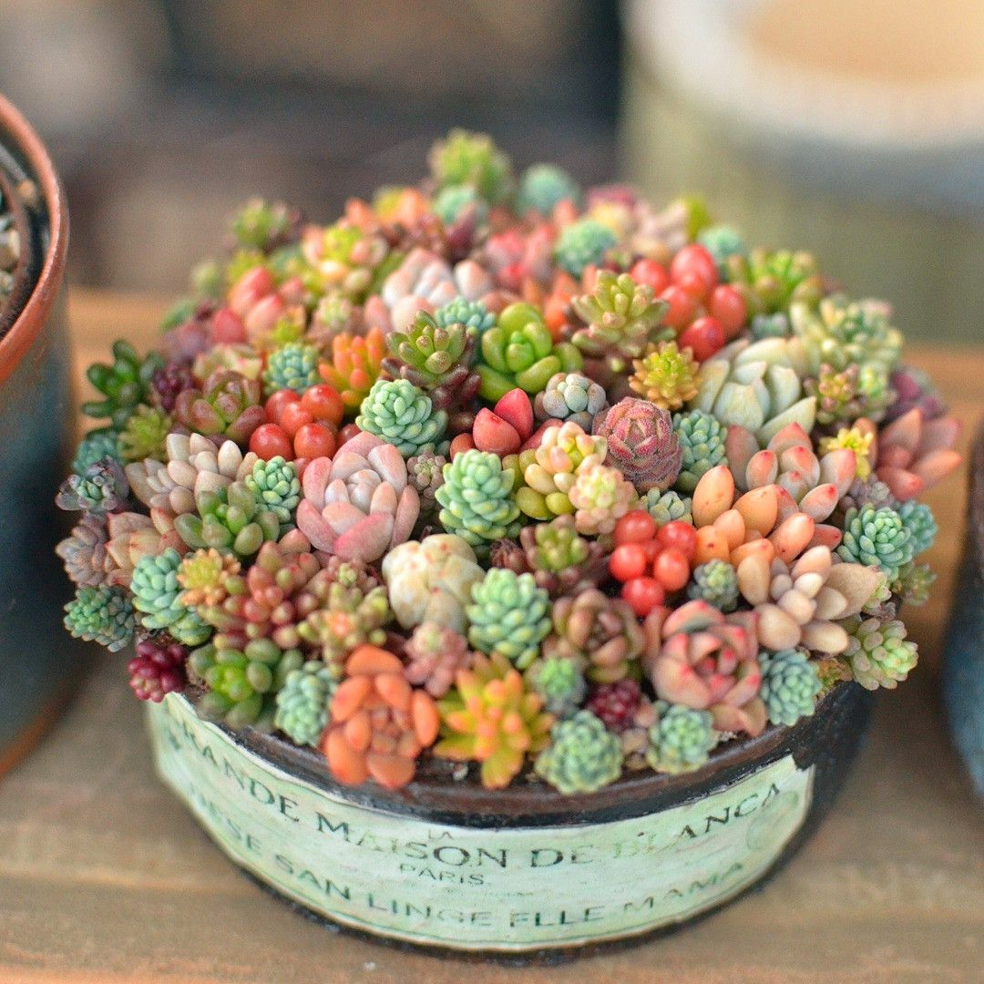 Photo of 60+ Amazing Succulent Planters Instantly Beautifying Your Home