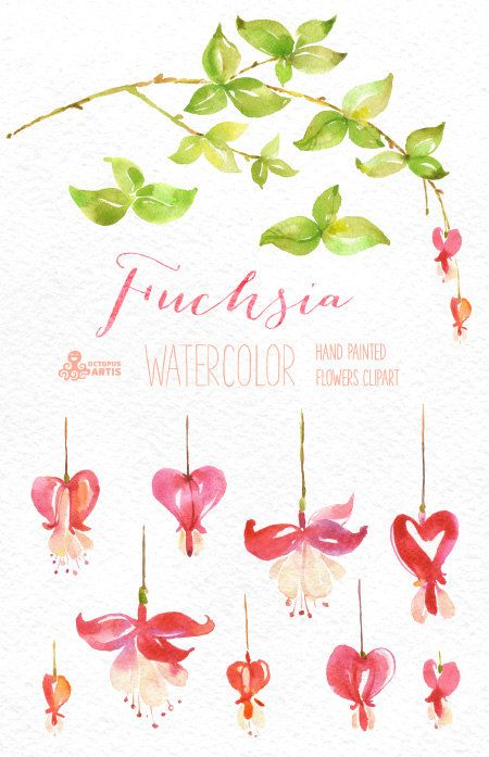 Fuchsia Watercolor Floral Clipart. Hand painted by OctopusArtis
