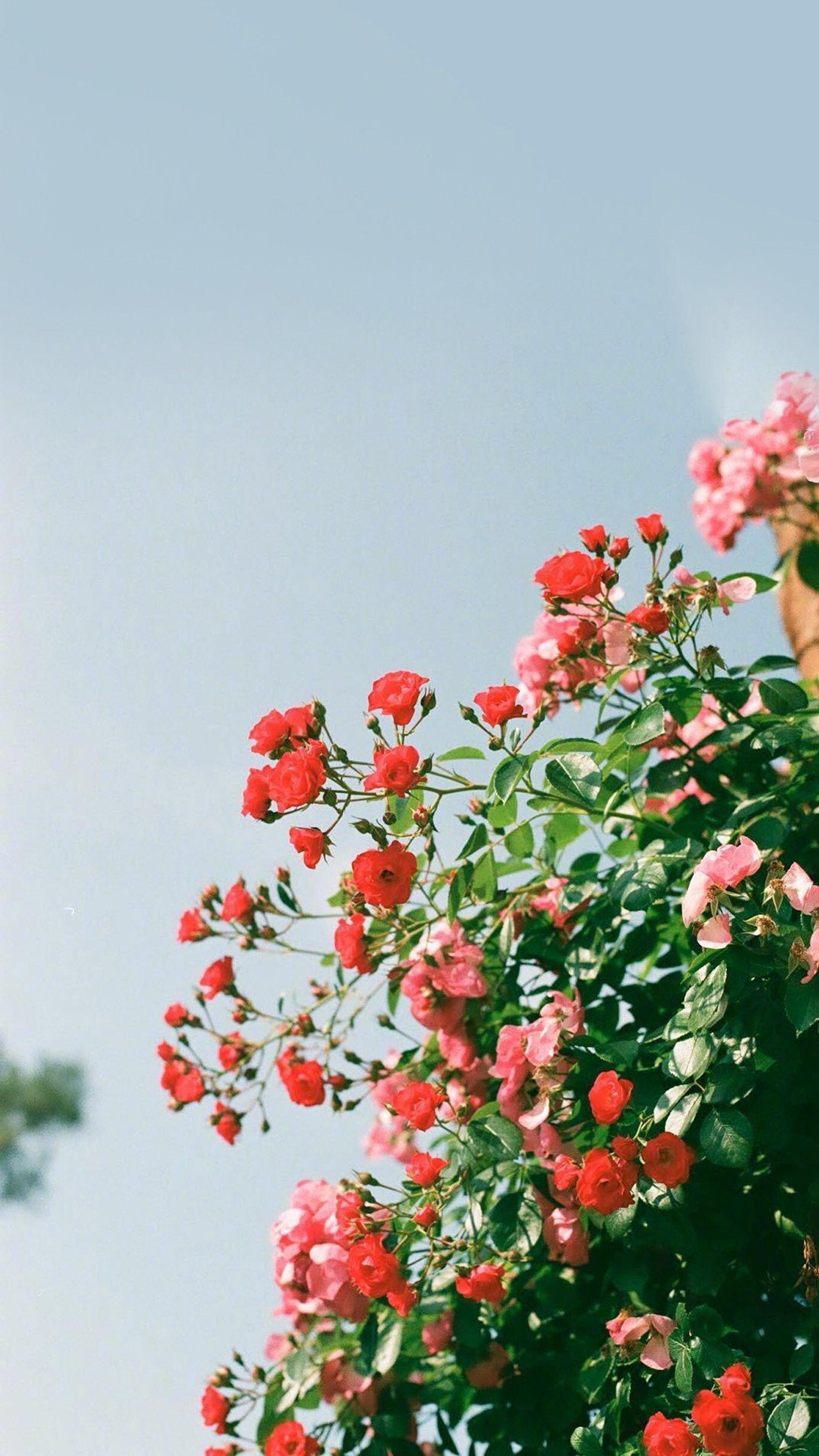flower + sky + wallpaper in 2020 Flower aesthetic