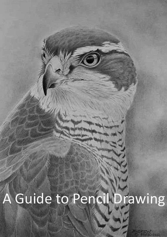 A guide to pencil drawing an ebook to print by naturalworldart £14 95