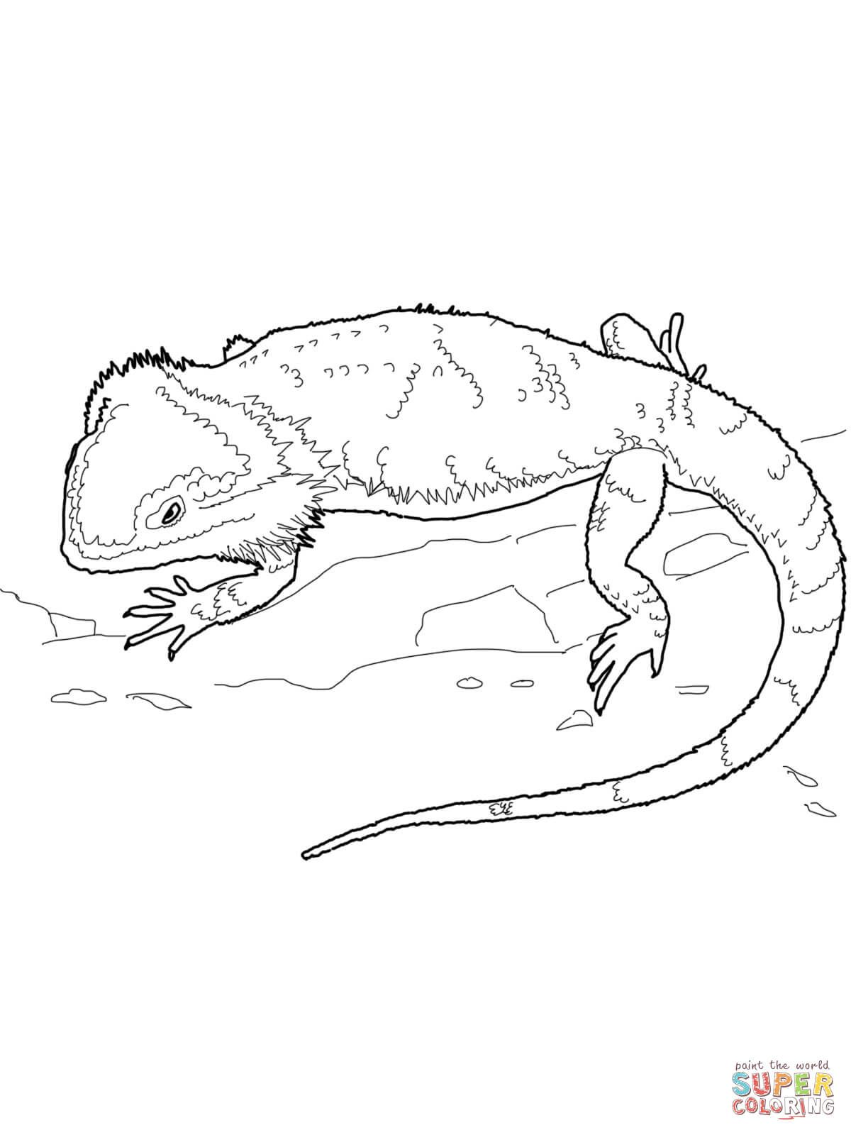 Bearded Dragon Coloring Pages | dragon | Pinterest