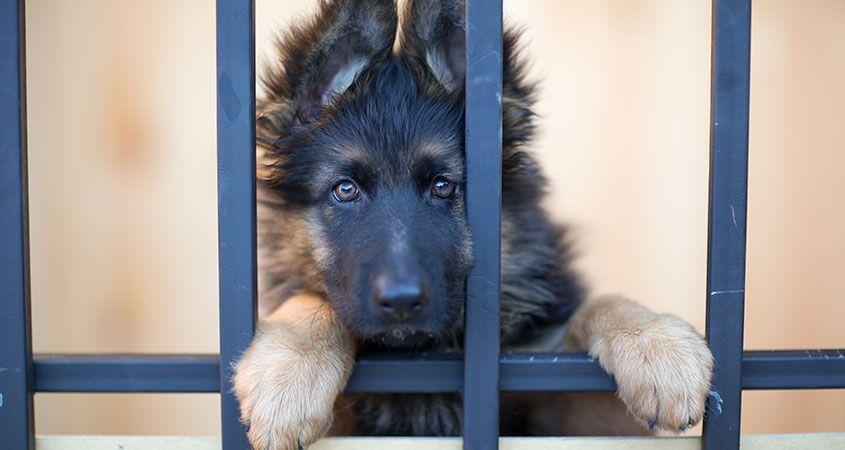 No kill shelter Animal shelters near me, Pets, Animals