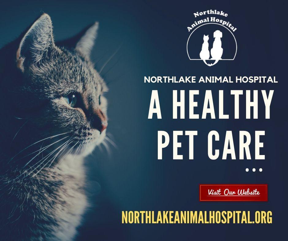 13+ Tenth street animal hospital ideas