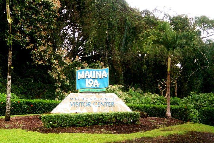 Macadamia Nut Farm On The Big Island Hawaii Com Big Island Mauna Loa Big Island Hawaii