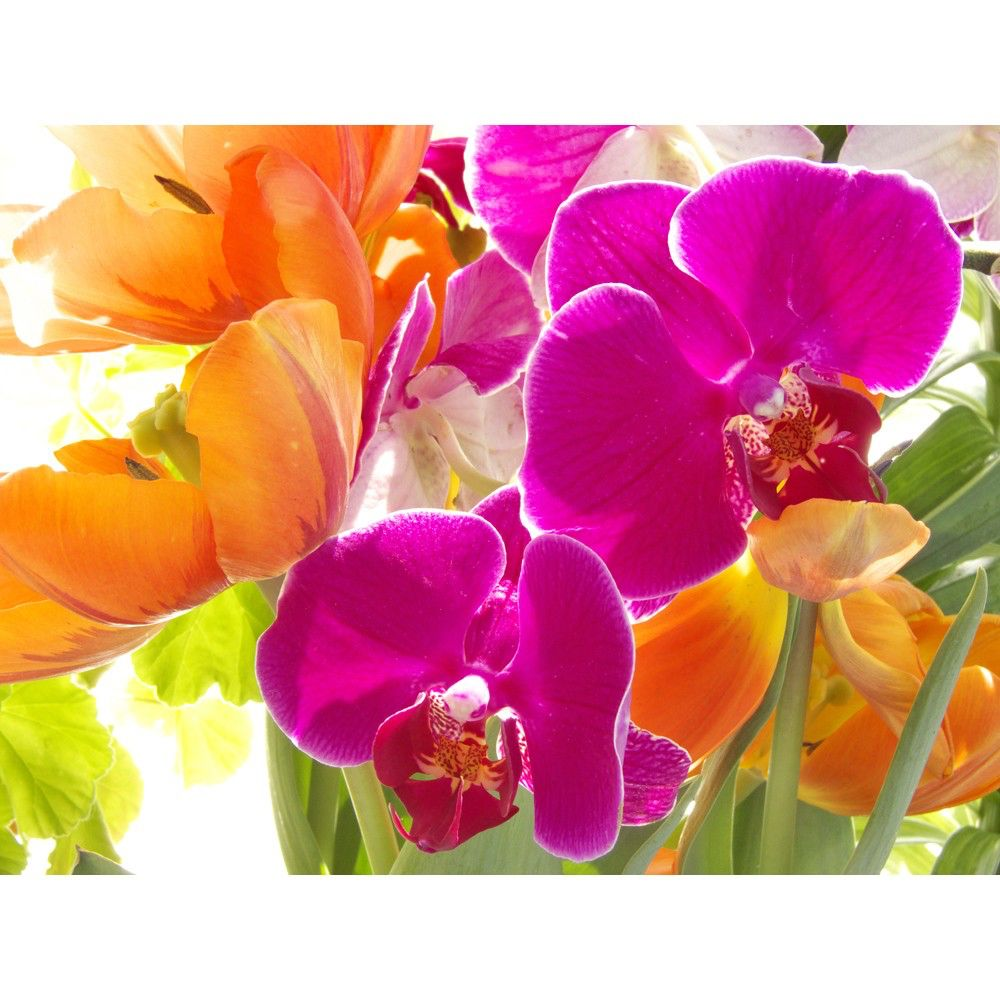 Orchids and Tulips Photograph, Magenta Orange Neon Flower Wall Decor, Floral Still Life, by JudyStalus on Etsy https://www.etsy.com/listing/10869314/orchids-and-tulips-photograph-magenta