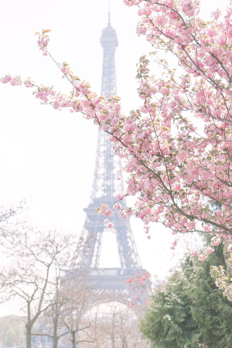 Cherry Blossoms In Paris Spring Photo Diary Pretty Little Details Spring Wallpaper Spring Aesthetic Cherry Blossom Wallpaper