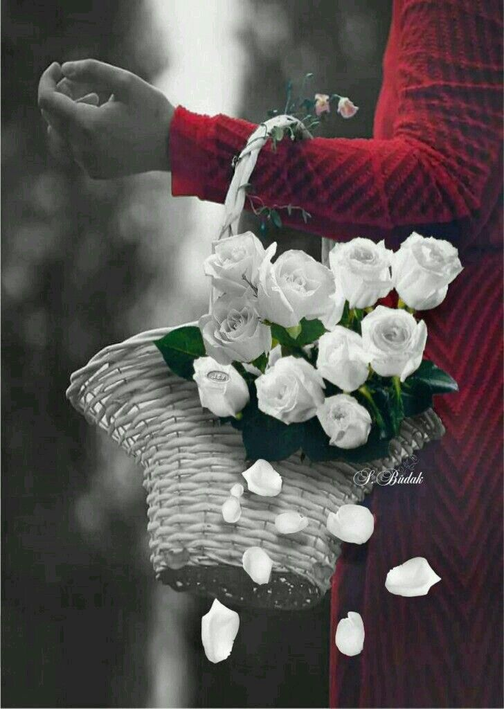 Pin By Ghada Moustafa On Flowers