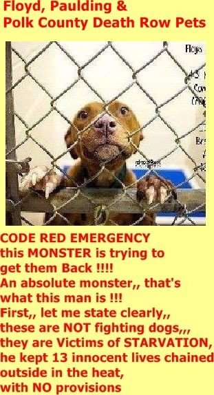 """SAFE ❤️❤️❤️❤️--- Animal control has said that we have clearance to """"GET THE OTHERS OUT of here !!"""" WE MUST FIND SALVATION FOR THEM --- FAST !!! This sicko has already contacted the shelter,,, he WANTS THEM BACK. And I want to get them out before there are any """"legal loopholes"""" that he could use. https://www.facebook.com/SavingPauldingCountyPets/photos/a.505955629496442.1073741860.376306482461358/856055174486484/?type=3&theater"""