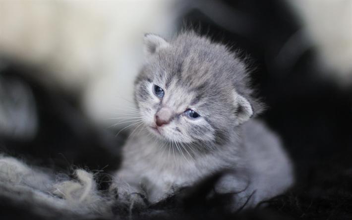 Download Wallpapers Small Gray Kitten Cute Animals Gray Cat Cat Breeds British Cat Pets Besthqwallpapers Com Cok Sirin Hayvanlar Cute Kittens Hayvanlar