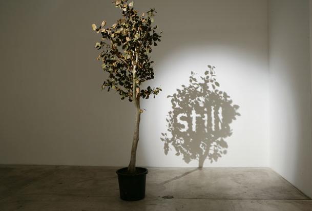 Still, 2005, Arbre artificiel taillé puis éclairé