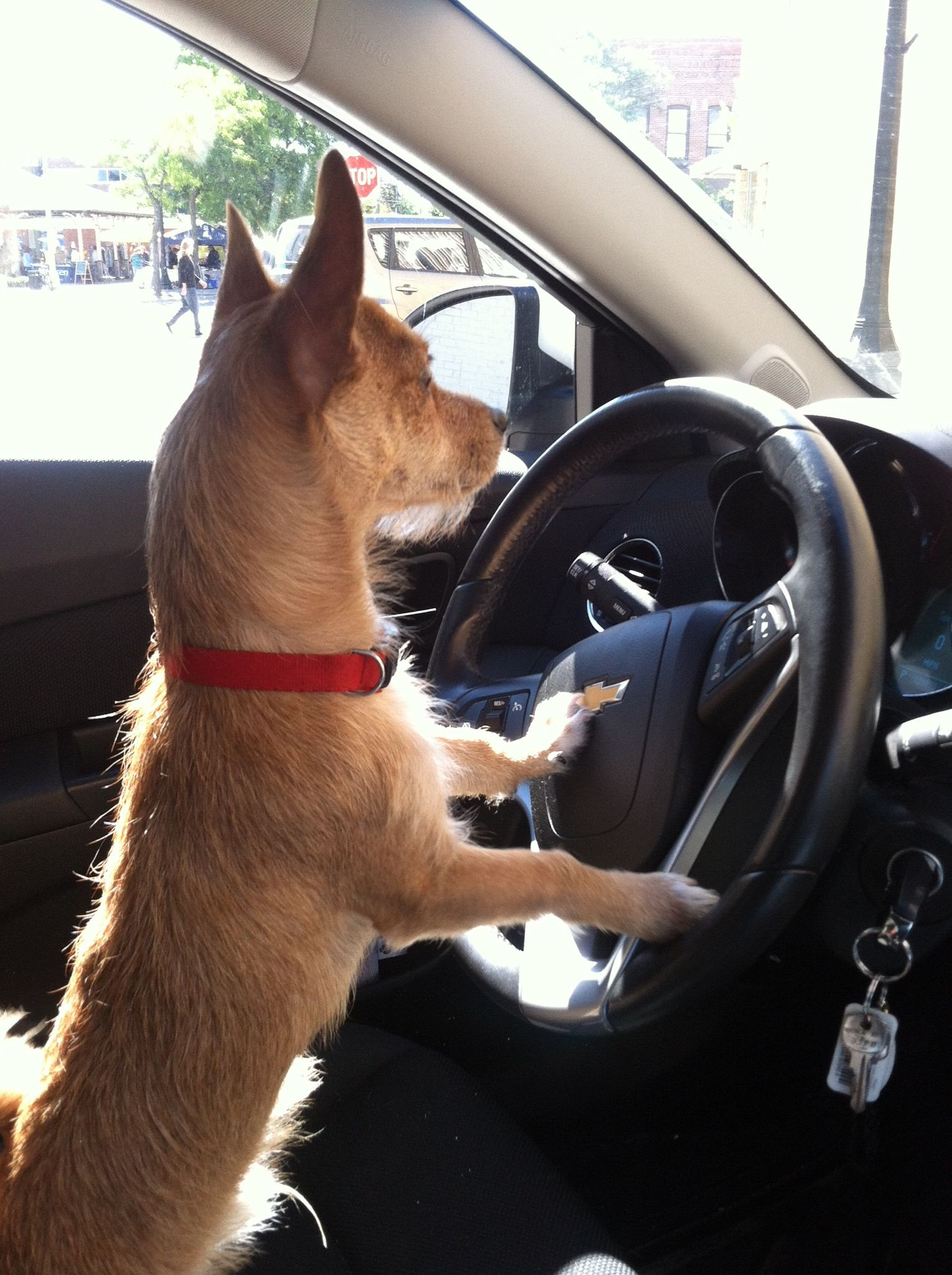 Sutton can drive now!!