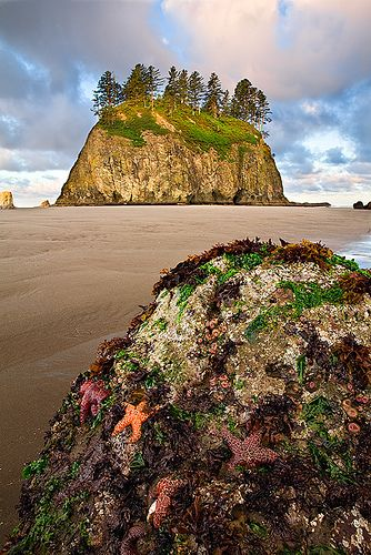 Second Beach, Olympic Peninsula, Washington, USA.