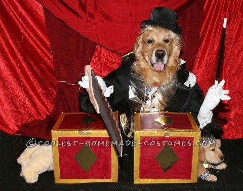 Coolest Homemade Couple Costume For Pet Dogs Magician Sawing