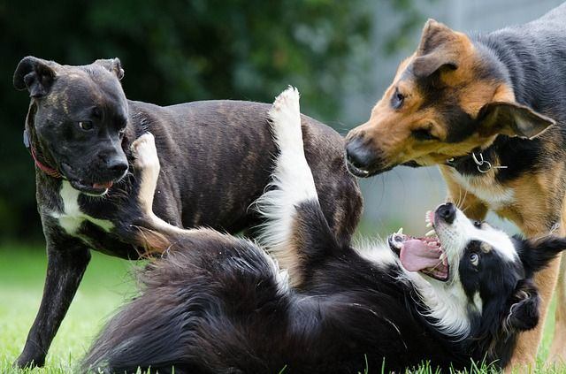 Does your dog need a little socializing, running around or playing fetch?