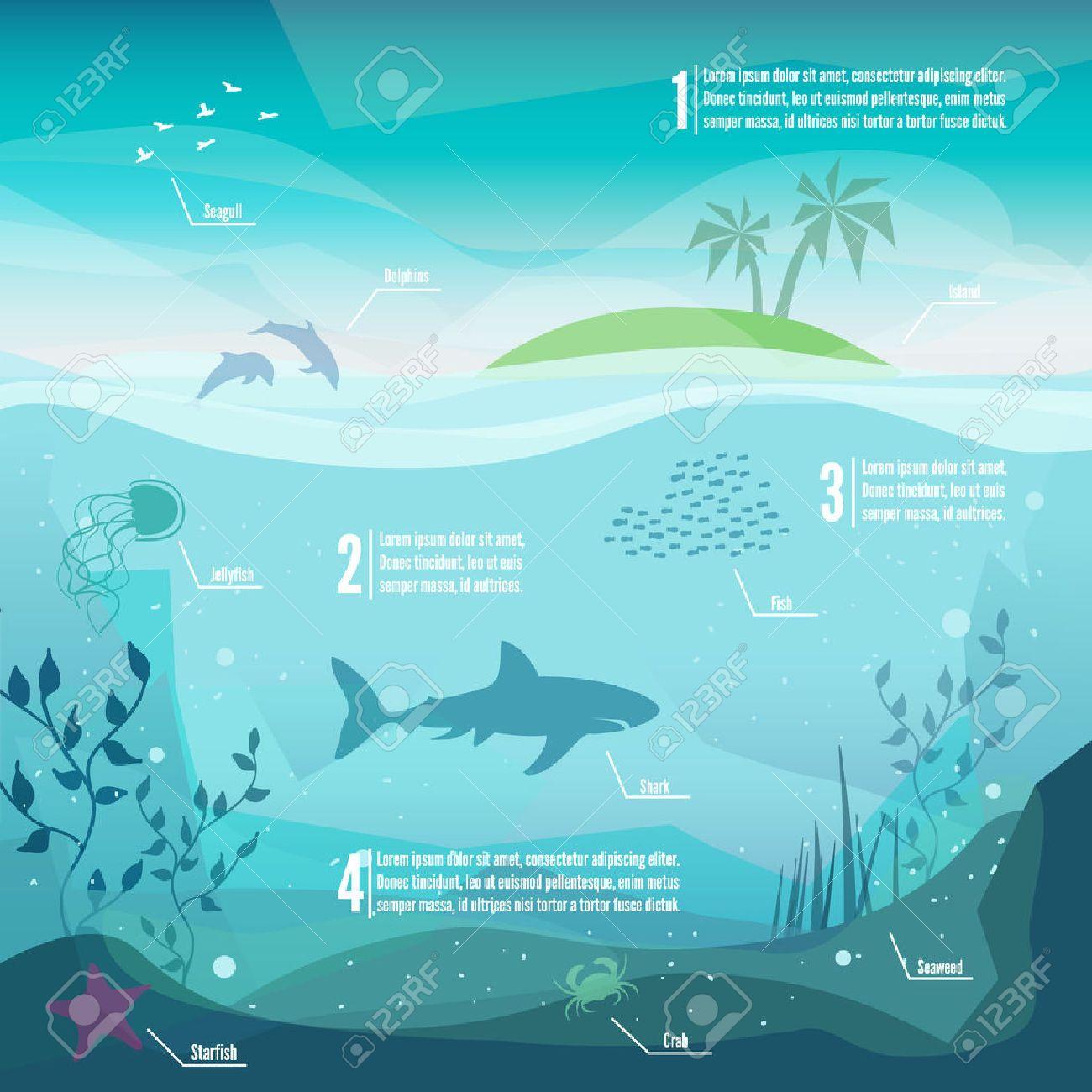 Resultado de imagen de infografía biologia marina   SEA   Pinterest ...