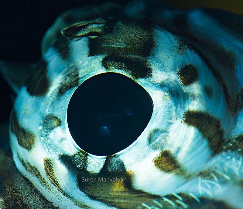 macro-close-up-photos-of-animal-eyes-by-suren-manvelyan
