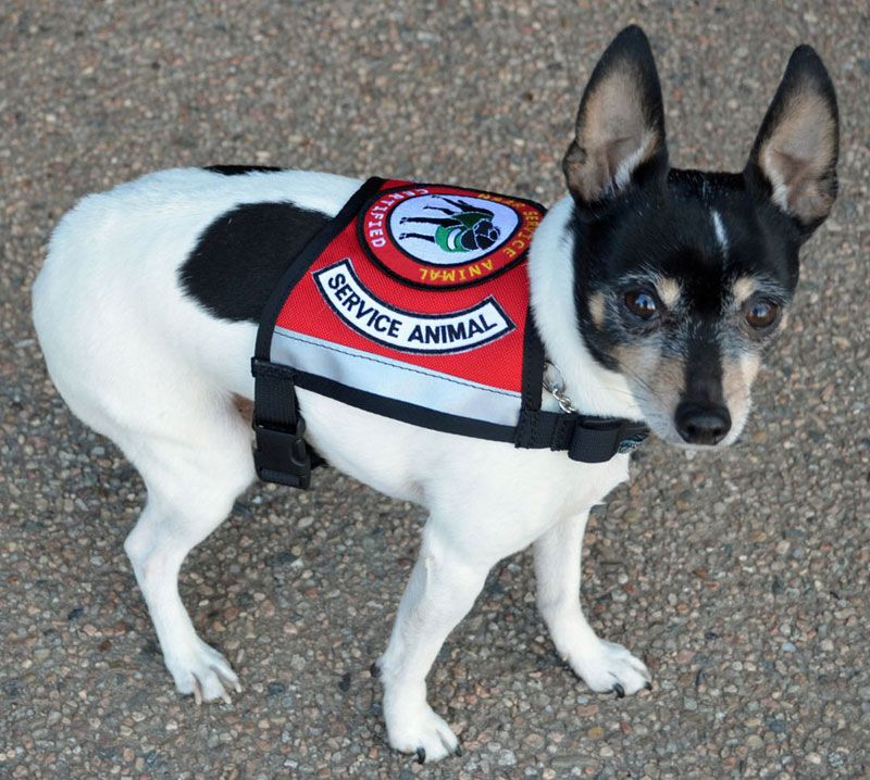 National Service Animal Registry Product Image Service