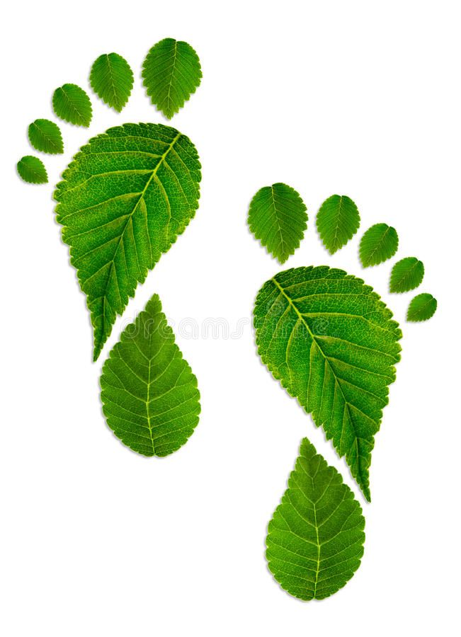 Trace foot from leaves stock image. Image of plant, environmentally - 50752491