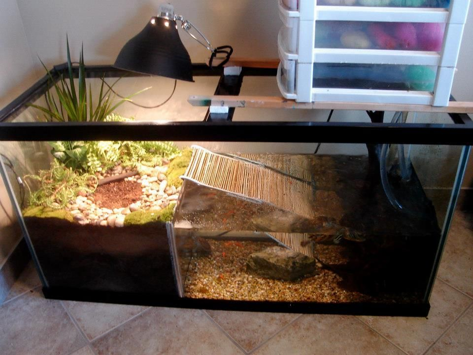 Turtle terrarium ideas google search pets care for Split fish tank