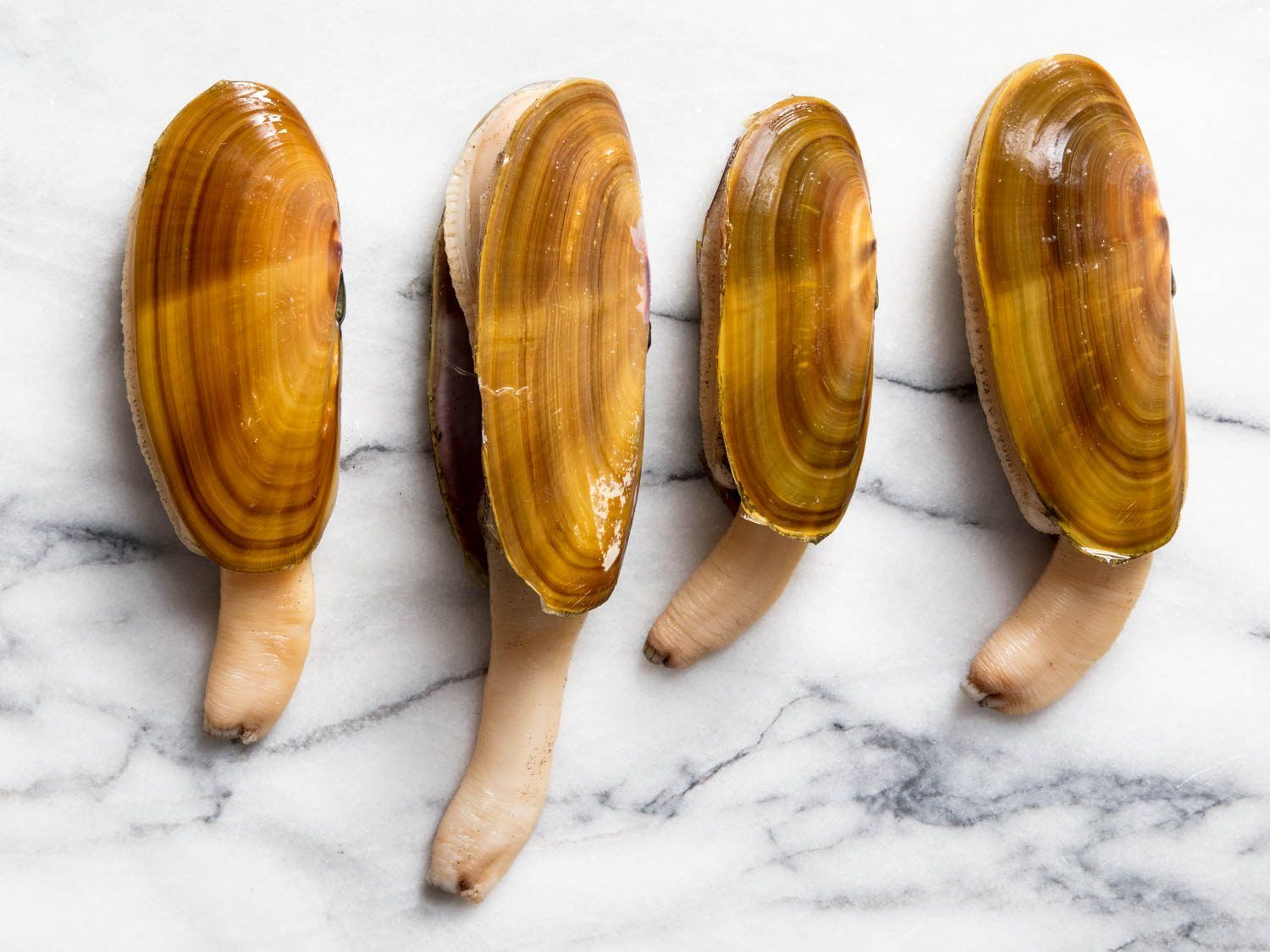 Pacific Razor Clams How to Catch, Clean, and Cook Them