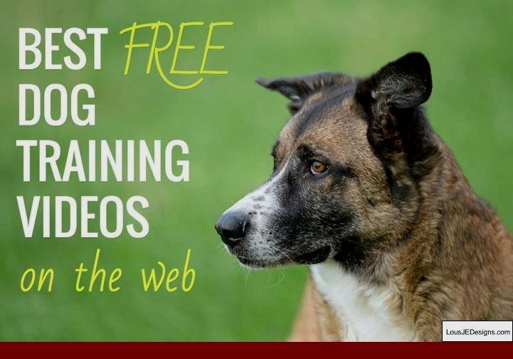 Nervous Dog Training Tips And Pics Of Teach Dog To Stop Barking Outside Tip 7850836 With Images Online Dog Training Dog Training Dog Training Videos