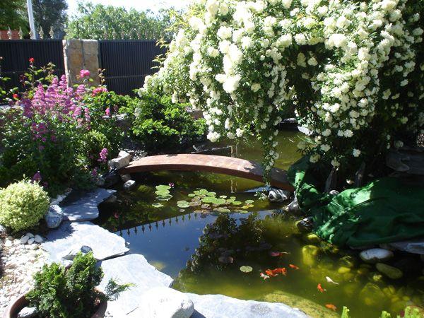 Dise o de jardines estanques acu ticos jardiner a plantas pinterest patios - Disenos de jardineria ...