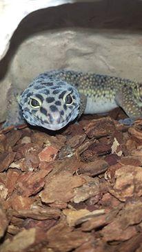 My Animal By Hollow Moonshine On My Animals Animals Lizard