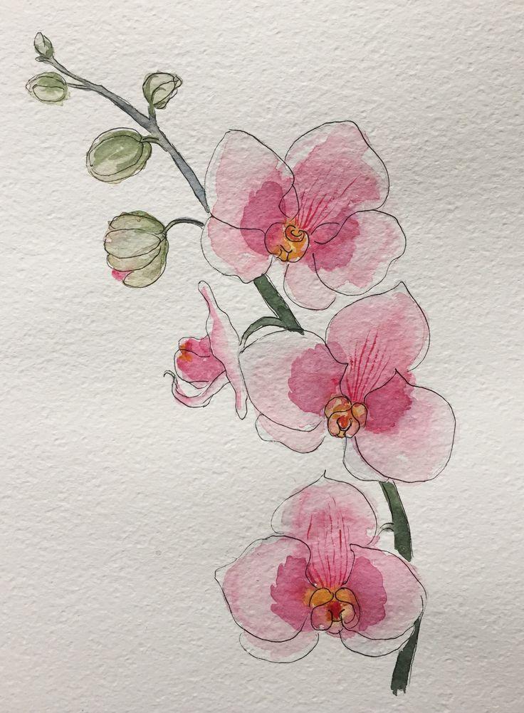 orchidea watercolor  helga le 2020  suluboya resimler