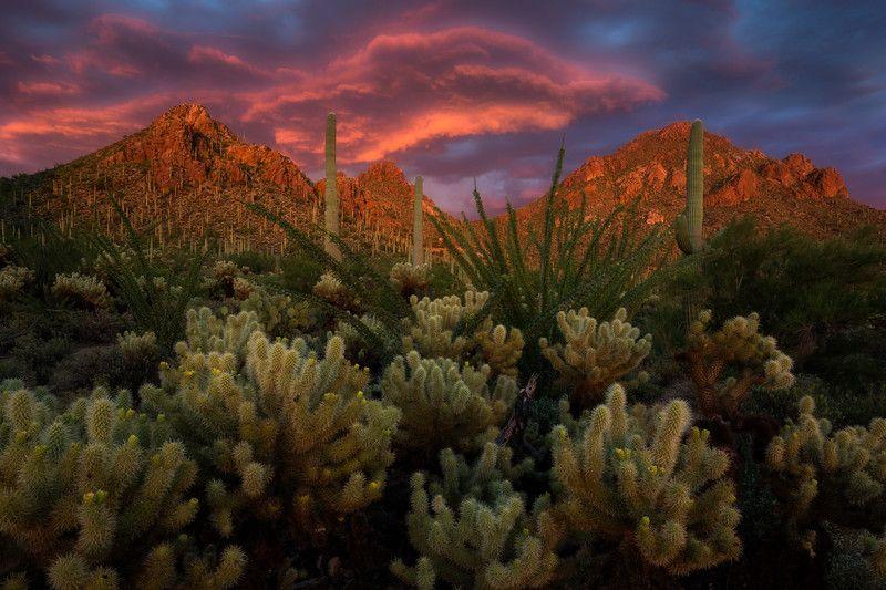 Tucson Mountain Park Mountain Park Desert Landscaping Landscape