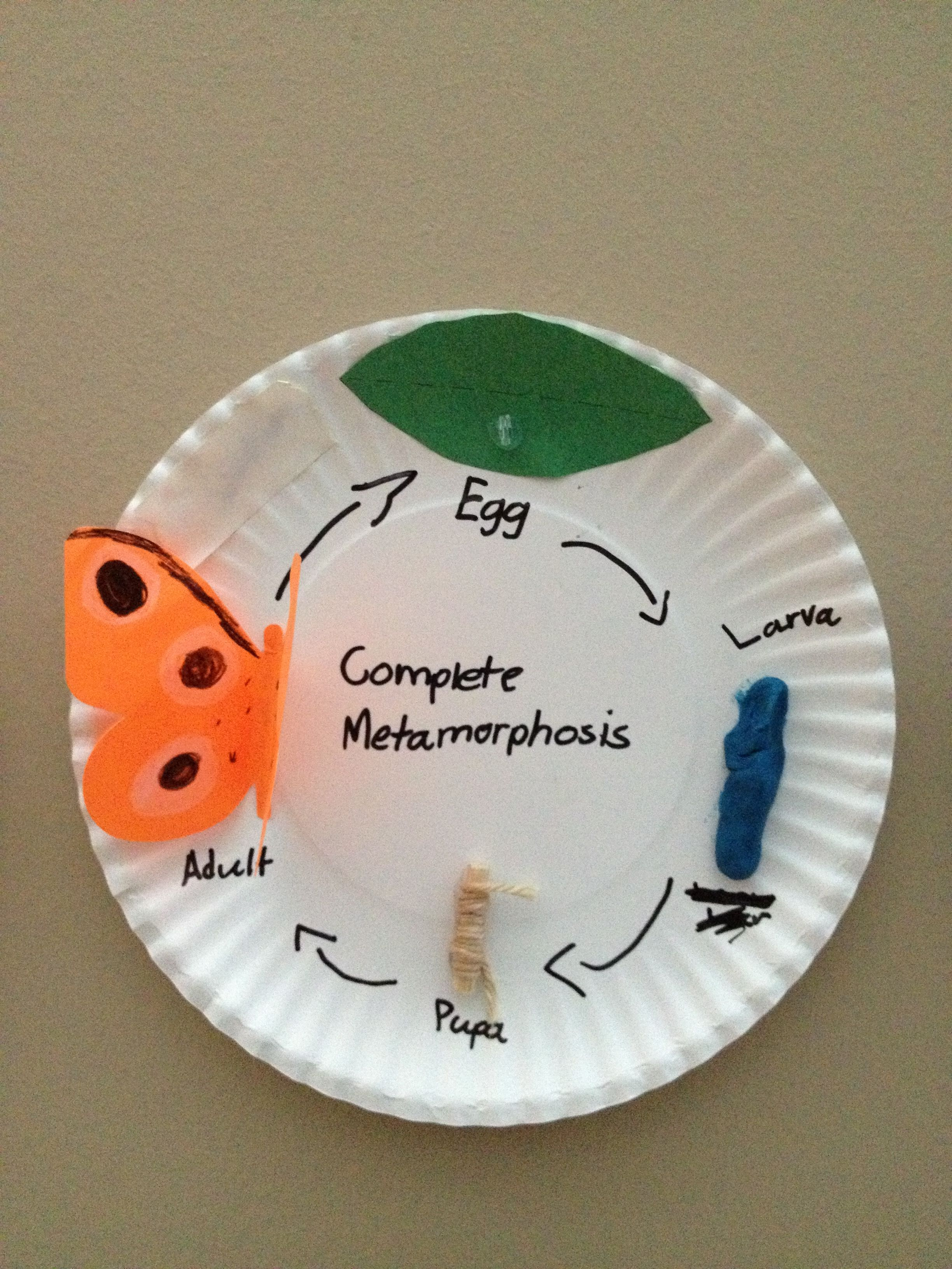 Complete Metamorphosis Model
