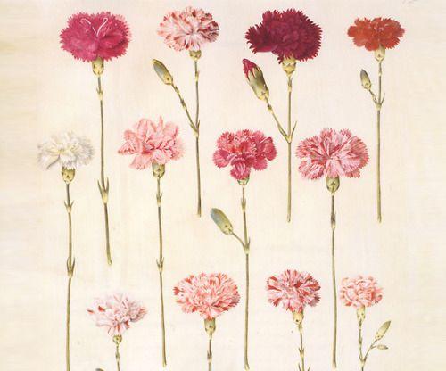 flowers, pink, and vintage afbeelding