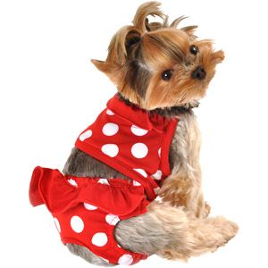 Simply Dog Red Dot Swimsuit Puppy Clothes Red Dots