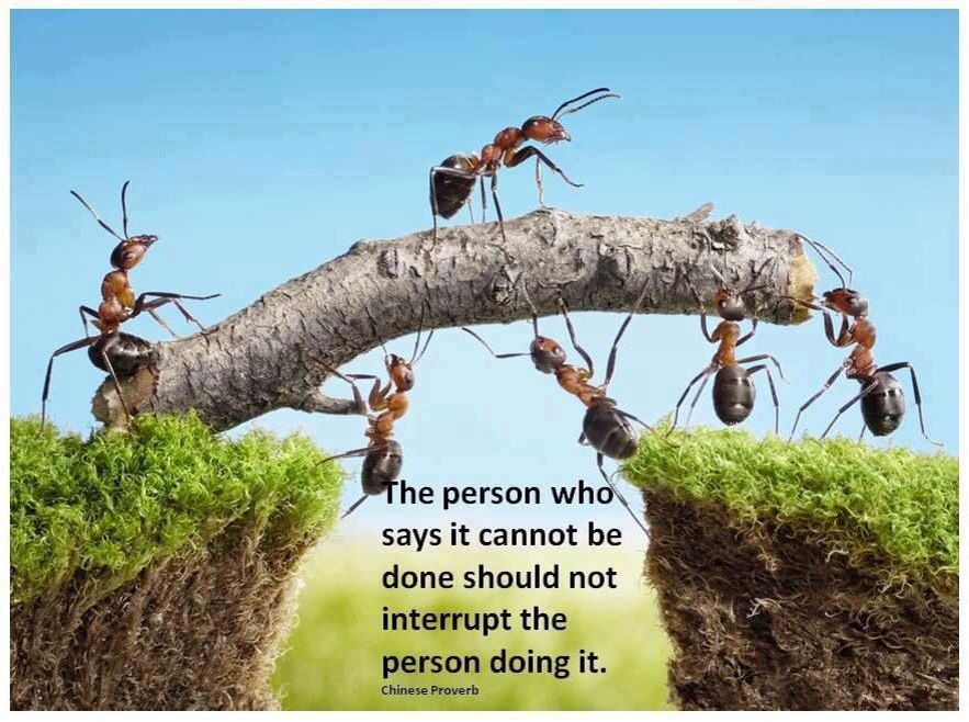 The person who says it cannot be done...